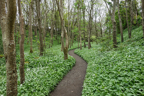 Garlic Trail | by Philip McErlean