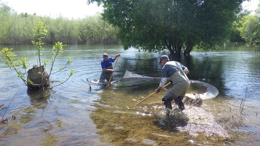 Electrofishing Rental