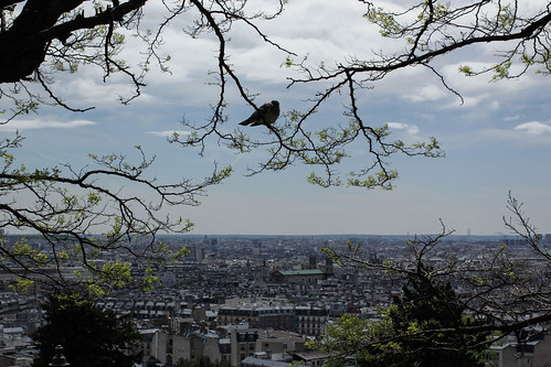 Fat pigeon and a beautiful view of Paris | by evelina ander