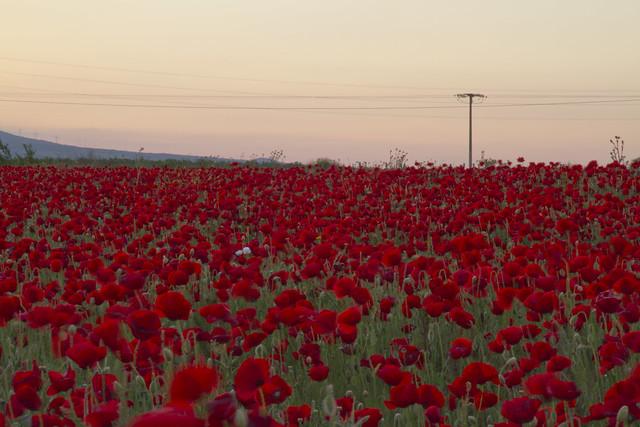 sinfonia de rojas y blanca (explore 21-6-2013-3)