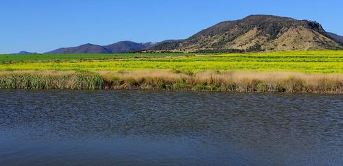 field landscape rapeseed southeastqueensland tannymorel