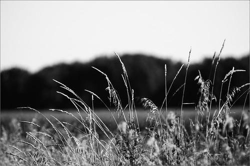 wild bw raw grasses roadside d300 joeldinda