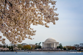 National Cherry Blossom Festival, Washington DC (USA)