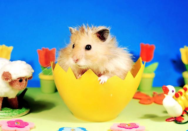 Happy Easter! ~ Gucio