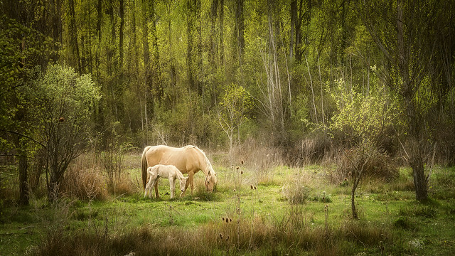 The mare and the foal