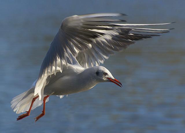 He,s a nice gull.