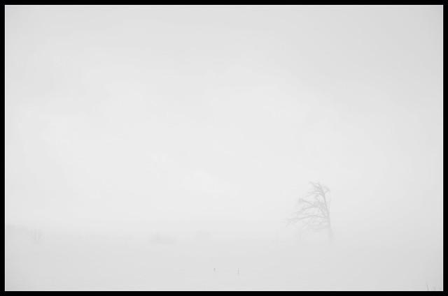 Lone Tree In Bright Fog