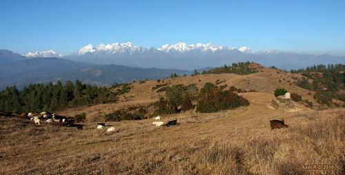 montagnes mounteverest moutonmoutons nepal préci pattale solukhumbu