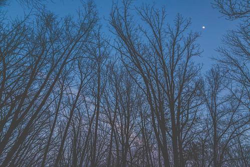 minnesota nerstrand nerstrandbigwoods nerstrandbigwoodsstatepark bluehour clouds dusk moon sky sunset trees unitedstates us