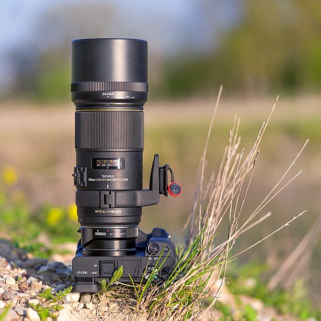 Sigma EX 150mm ƒ/2.8 APO Macro EX DG OS HSM on SONY ⍺6300