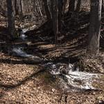 Feeder stream along South Boundary Trail