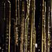 Flute Ensemble - Apr 2017