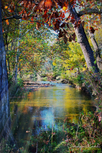 autumn trees light shadow fall nature water grass river landscape colorful stream natural pennsylvania scenic scene pa rays bushes bluemountain waterscape palmerton kunkletown littlegap mygearandme mygearandmepremium carolynlandi