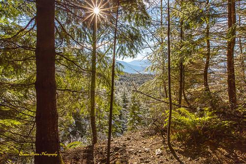 trees trail sunstar mountteneriffe