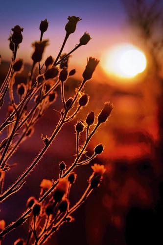 flowers sunset beautiful silhouette canon haze weeds dusk bayarea bluehour alameda hdr portofoakland imperfect 5dmarkii simontsegay