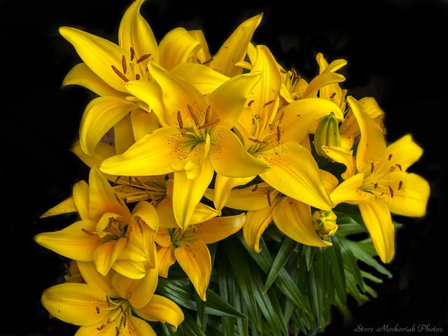 Golden Lilies_15973