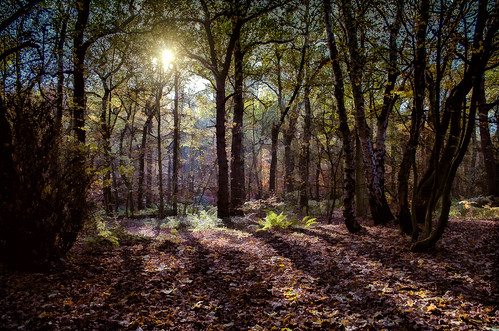 woodland autumn sun sunlight glade forest trees wood leaves decay shadows backlit branches branchlet nikon nikond5100 raw howellwood nature naturalhistory southkirkby landscape