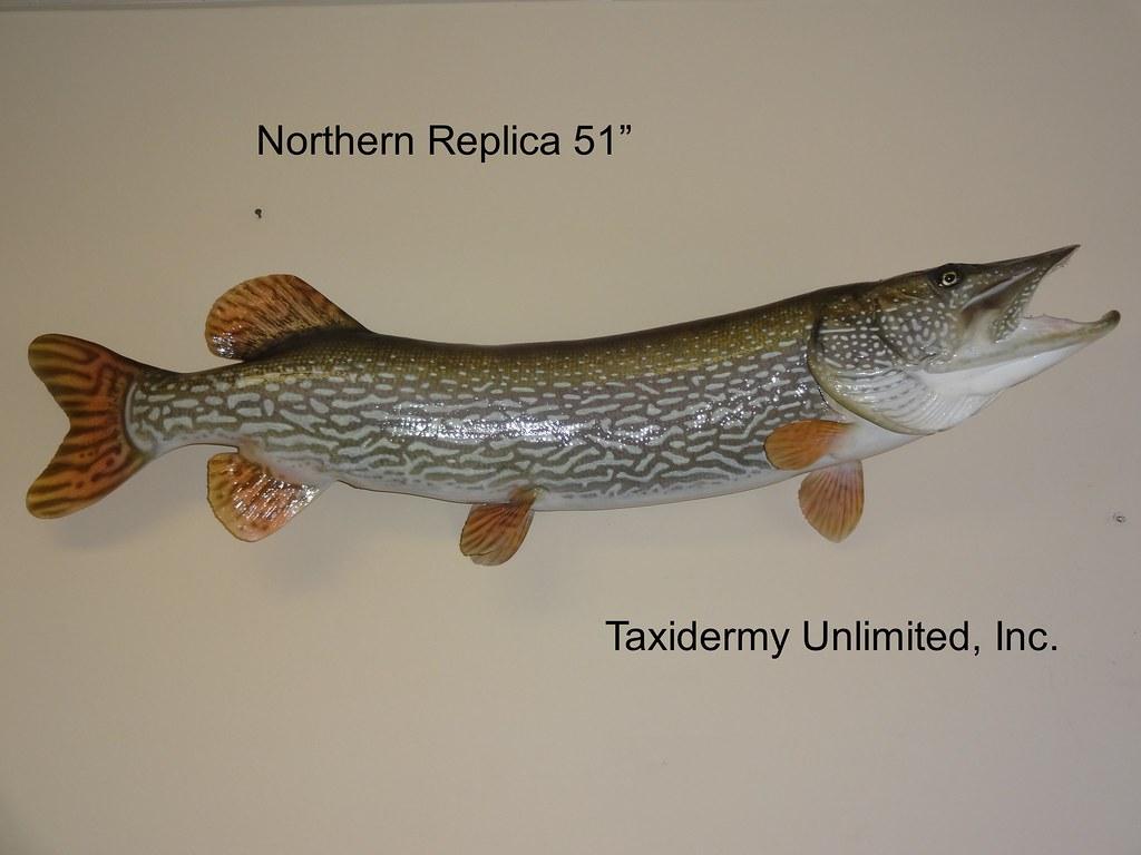 Fish | Taxidermy Unlimited