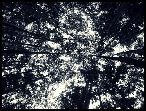 Canopy | by Rima_B