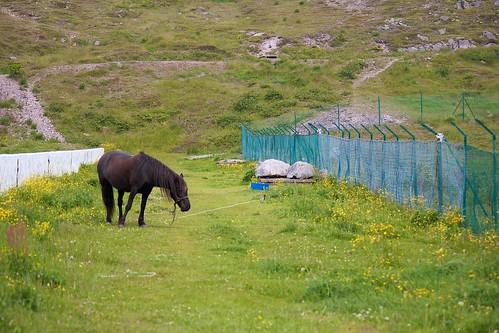 horse canada france beach rural newfoundland pony quaint stpierre fishingcommunity miquelon saintpierre newfrance