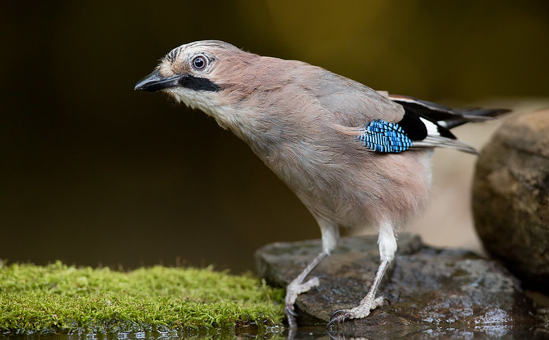 Jay - [colour balance set to Cloudy] - my preferred