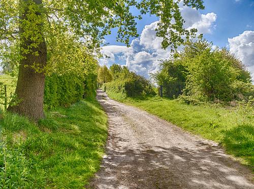 Walking Trail   by enneafive