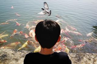Japan, Fly & Swim