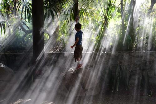 california park light boy mist cute zoo kid san play diego safari mister streaks misters