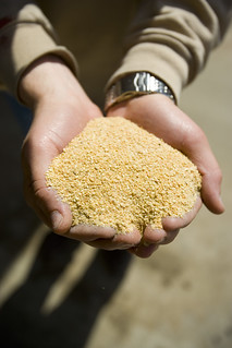 Soybean Meal | by UnitedSoybeanBoard