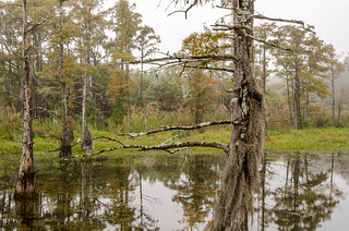 Black Bayou | by Keith Yahl