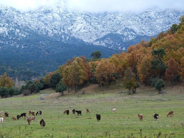 Así es el entorno paisajístico de Navaluenga en Ávila