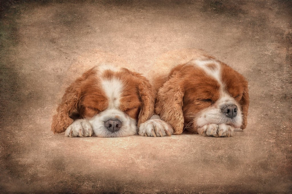 Hush Puppies Trecking   sandalenfan1   Flickr