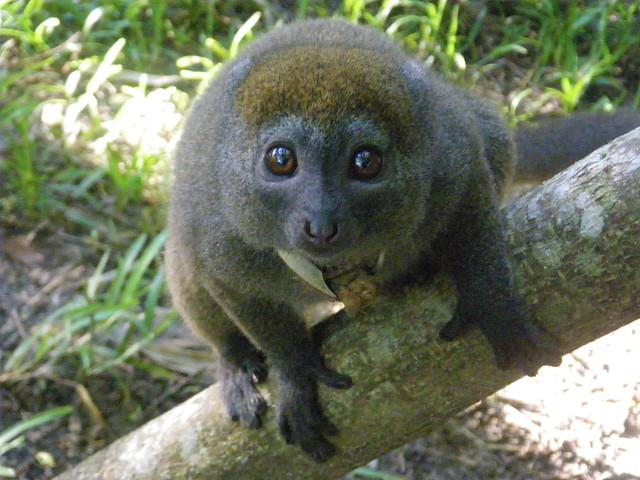 Madagascar2010 - 52