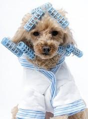 Szeretne kutyakozmetikusnak tanulni?