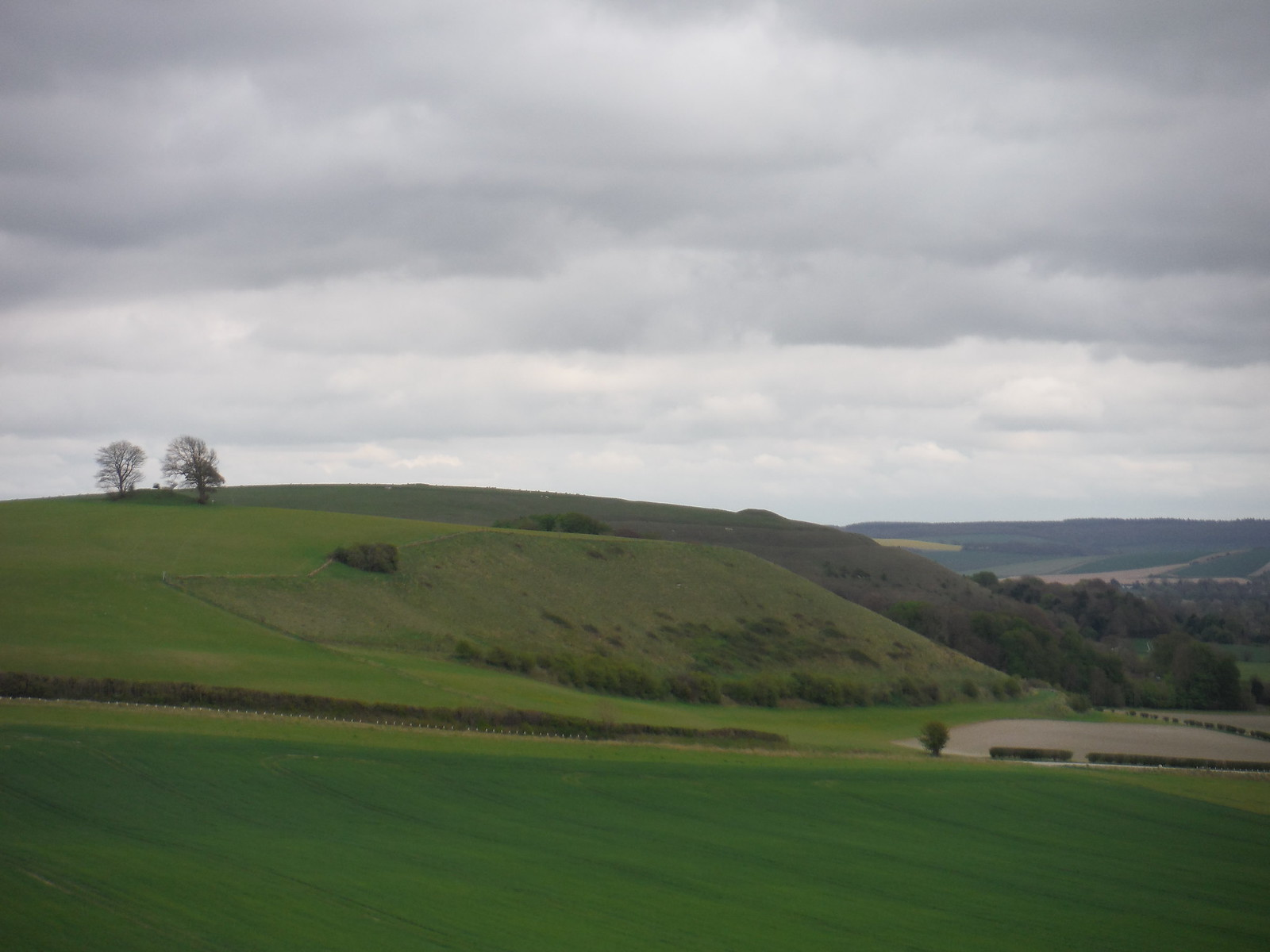 View back to Middle Hill and Scratchbury Hill SWC Walk 286 Westbury to Warminster (via Imber Range)