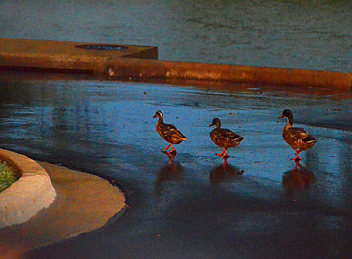 sunset rain texas ducks georgetown suncity