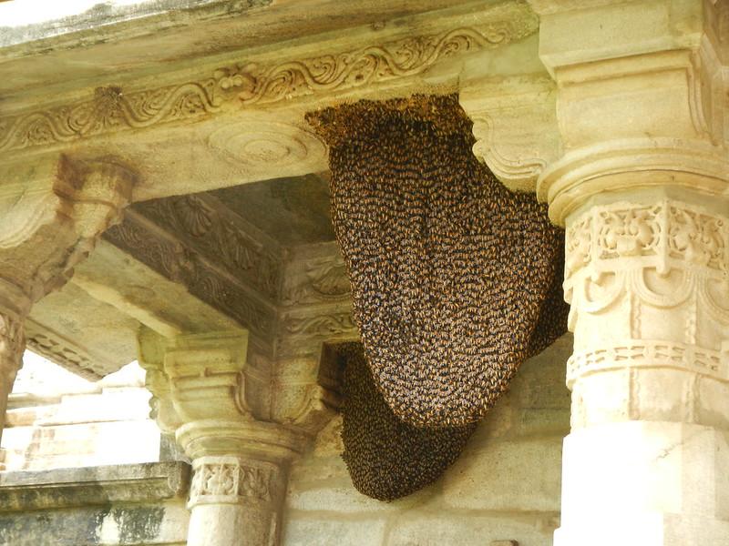 Bienen!