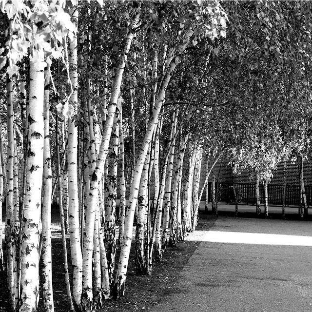 September 2 - Trees