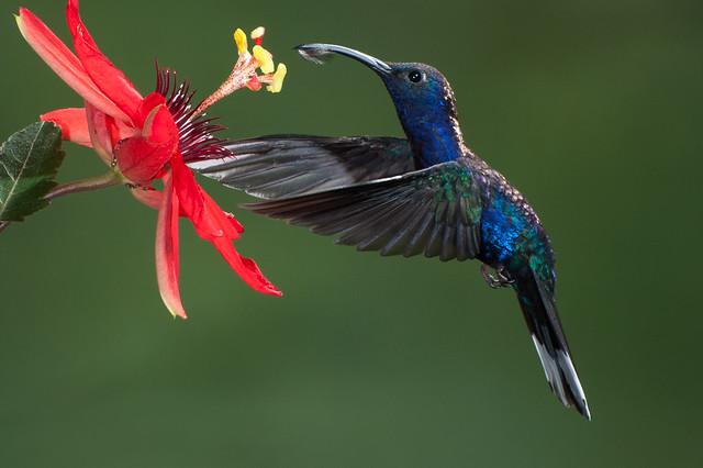 A Drop of Nectar on the Beak