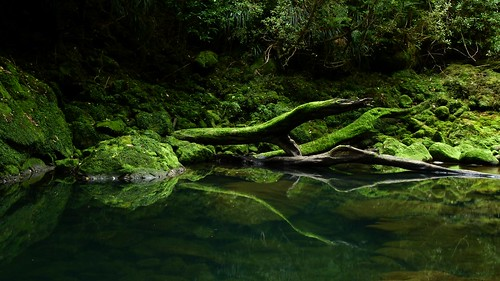Bullock Creek, Paparoa National Park, West Coast, New Zealand | by New Zealand Wild