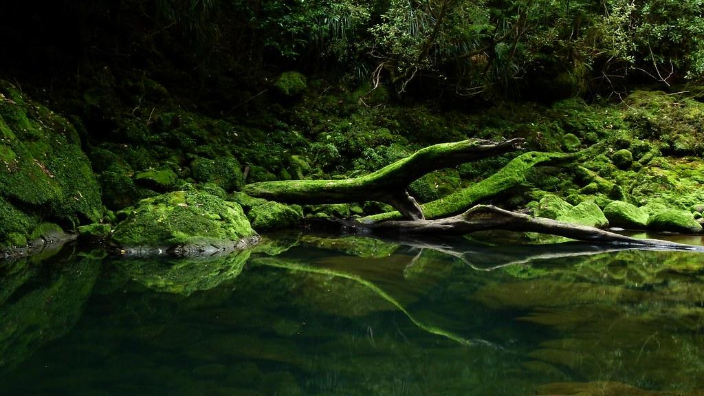 Bullock Creek, Paparoa National Park, West Coast, New Zealand