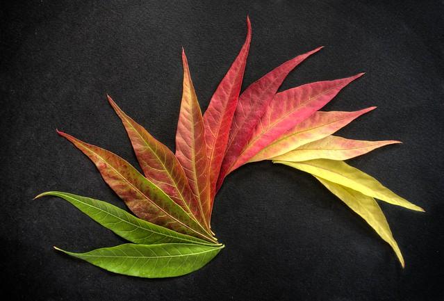 Fiery autumn colors