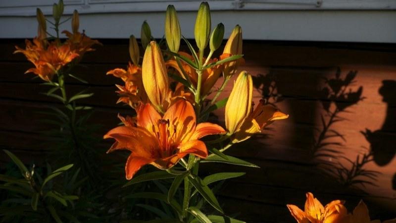 Vackra planteringar runt hotellet