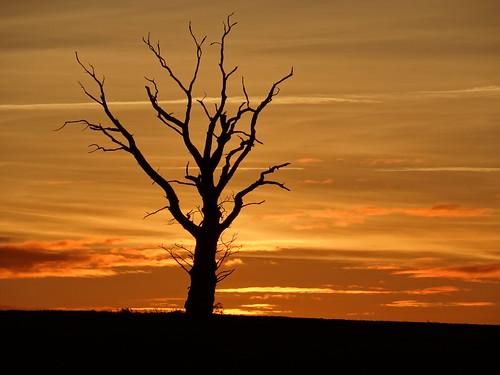 sunset tree silhouette knettishall