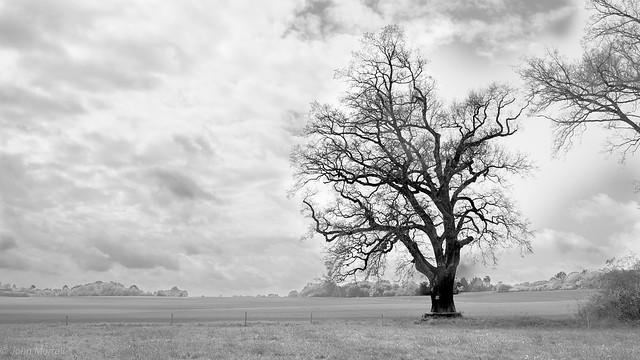 The Hunters Oak.