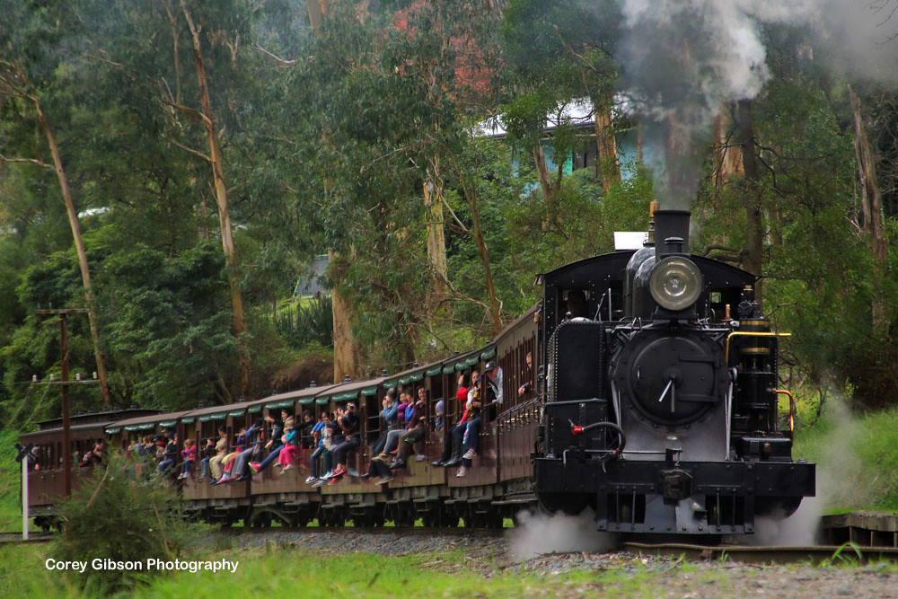 Puffing Billy Railway 8A Locomotive at Selby by Corey Gibson