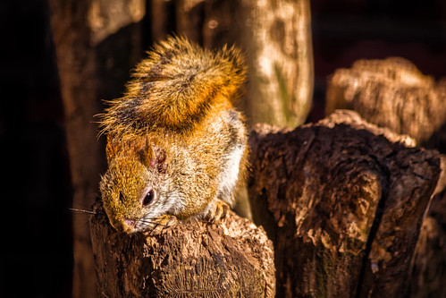 Hey, You, Seen My Nuts?