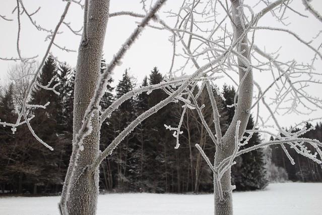 Nice frosty day