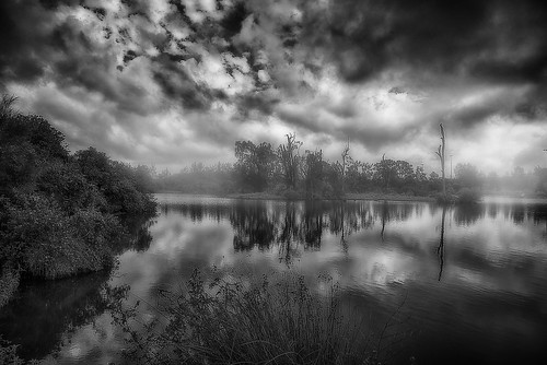 blackandwhite water landscape lagoon oxleycreekcommon pelicanlagoon