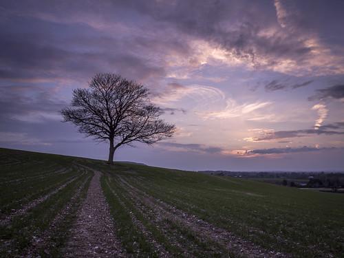 sunset tree field rural landscape lumix evening march countryside corn sundown wheat buckinghamshire panasonic valley fields redsky grad bucks dmc risborough princesrisborough m43 14mm mft gnd gh3 pyrtle leefilters damianward ƒ25 ©damianward micro43 microfourthirds hh014 hard06